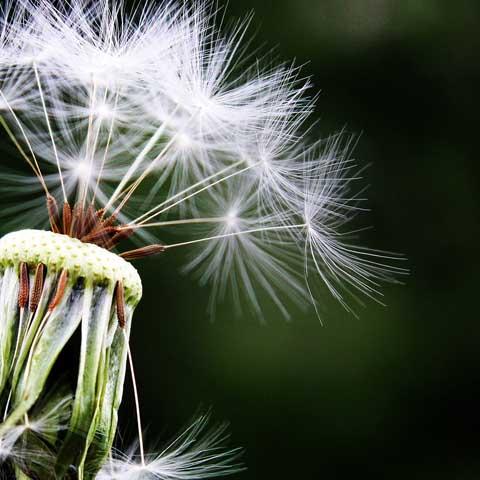 Hay Fever Treatment | Allergic Rhinitis Treatment